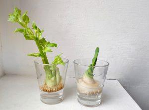 groenten opnieuw groeien
