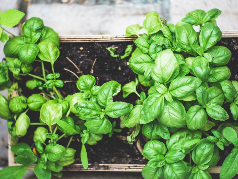 Laat je groenten opnieuw groeien