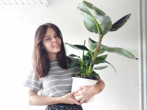 Bananenplant: mijn favoriete kamerplant - Musa verzorging